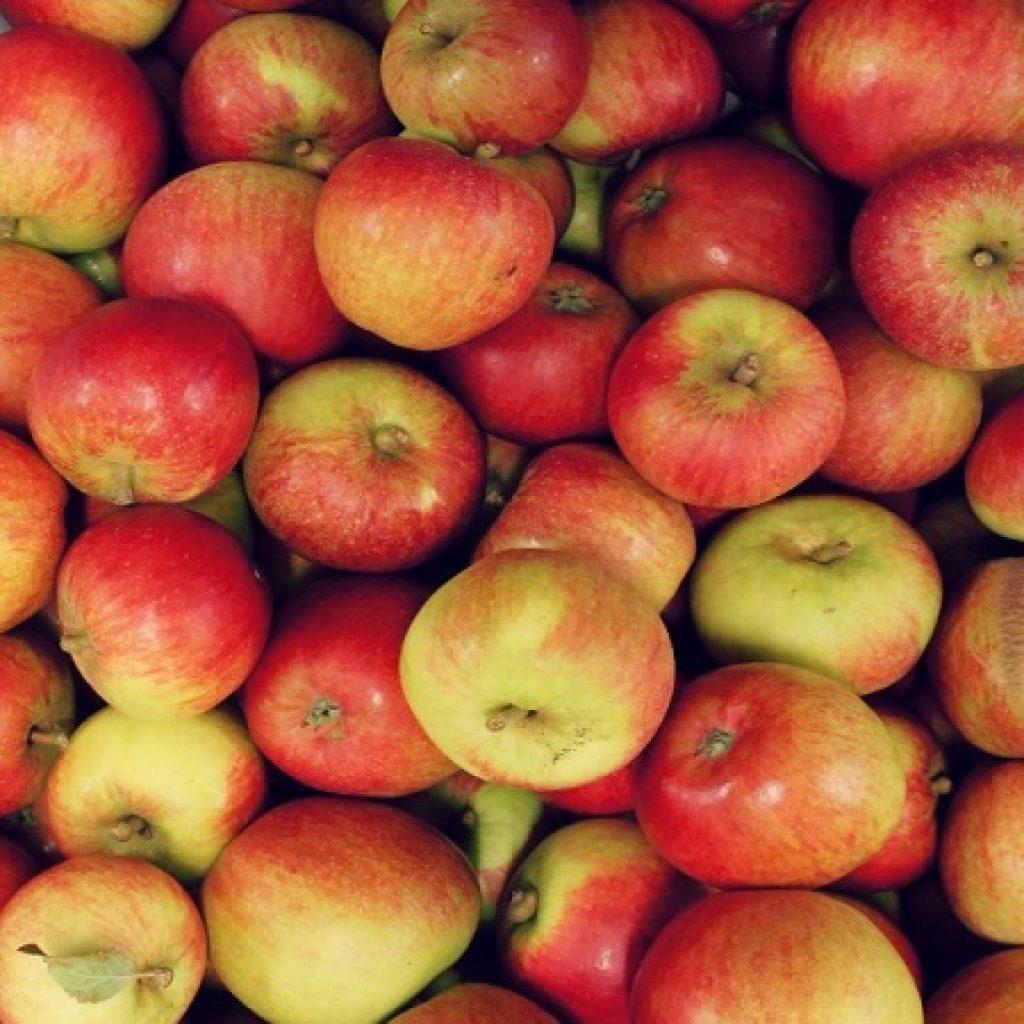 Cox Apples edited