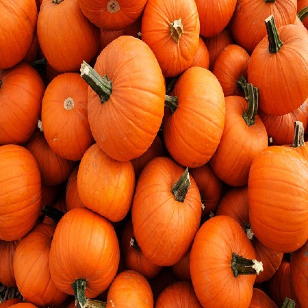 Shutterstock Pumpkin Pile 1