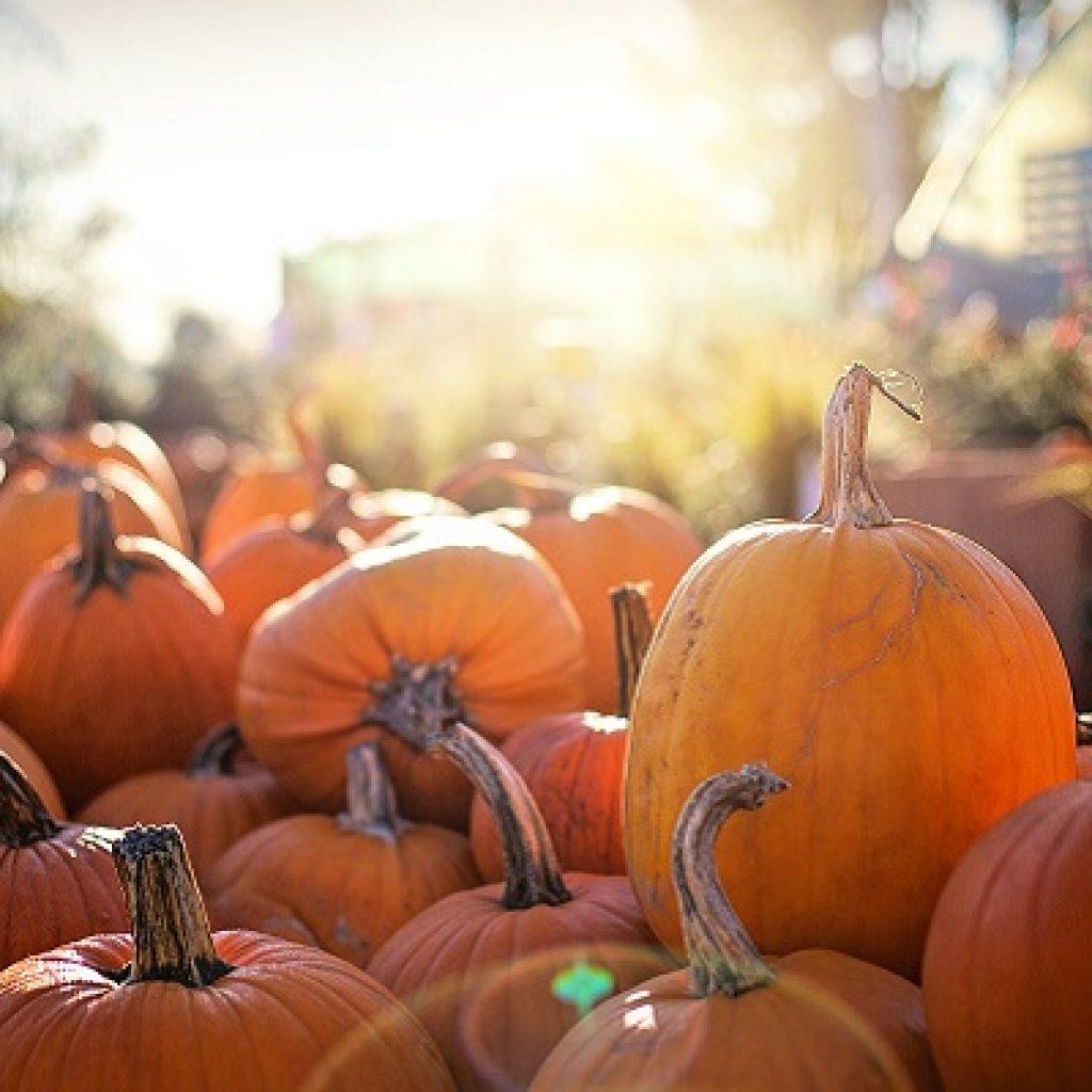 pumpkins 2871265_1920