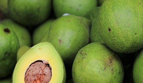 avocado 2742200_960_720