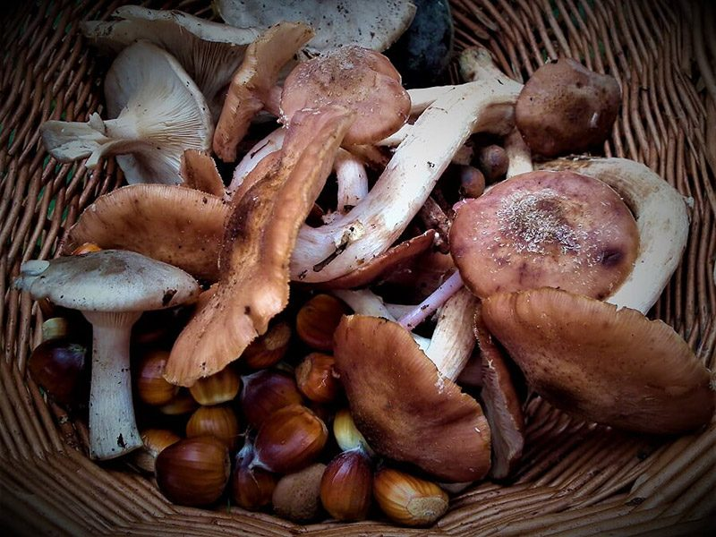 mushrooms-in-basket